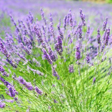 aroma-aromatic-beautiful-248158